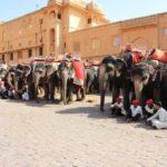 ジャイプール観光4【象のタクシーで行く】インド世界遺産アンベール城
