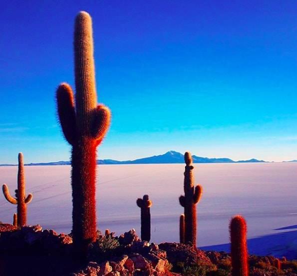 ウユニ塩湖のインカワシ島 (Inca Wasi)